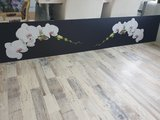 P112 Orchid carpenter
