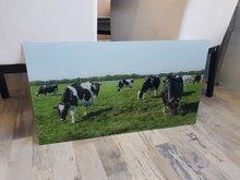 P48 Koeien op glas